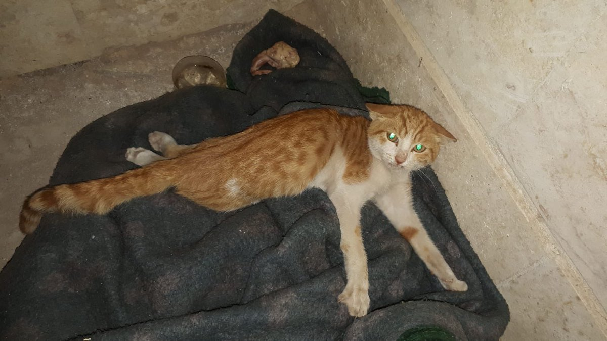They called us from Afrin city ( in the other part of the Syria ) for this cat  Some kids beat him and his paws are broken  No one from Ernesto's can go to Afrin city so we offered them to send him with private car / taxi and we will pay for this . Waiting for him tomorrow!! <br>http://pic.twitter.com/FM9N1r9cHE