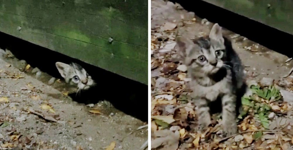 Kitten comes out from under a deck when rescuers arrive - his siblings follow suit. See full story and updates: lovemeow.com/kittens-under-…