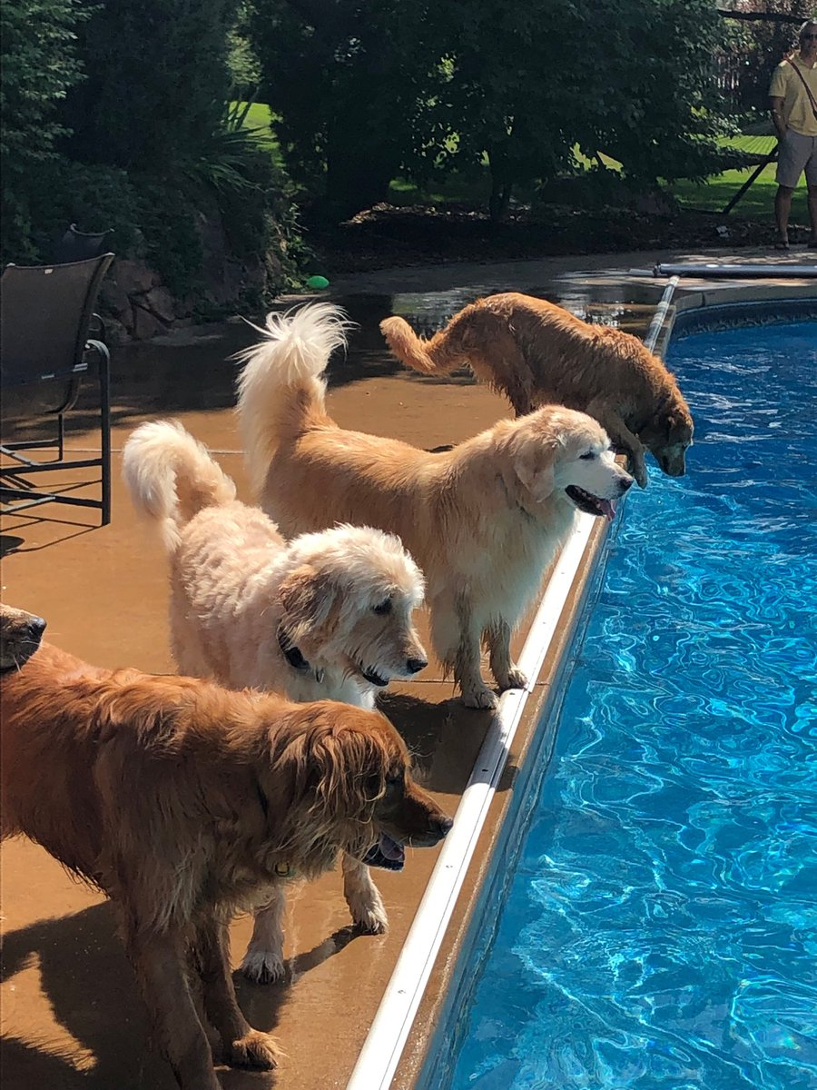 Got to go to a golden retriever pool party. Was wonderful to see so many.<br>http://pic.twitter.com/xB5QlUULUA