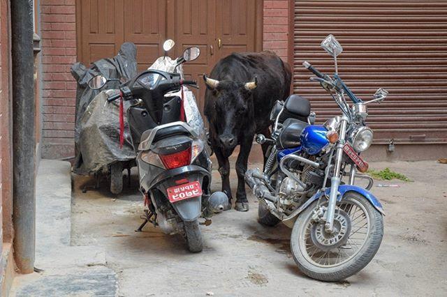 Parking in Káthmándú I. (Thamel) / Parkování v Káthmándú I. (Thamel)#nepali #nepal #nepal🇳🇵#nepalese #kathmandu #cow #kráva #krava #parking #parkovani #parkování #street #ulice https://ift.tt/2NgBWKe