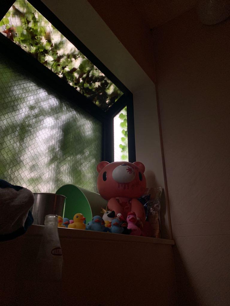 隣人のアイヴィーがいい感じに窓枠を埋めてくれてていい感じに暗くて良い https://t.co/PITKAHrHCf