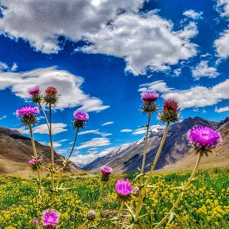Golden sunshine, bright blue & purple and the majestic #Himalayas of #spiti in the background,remind us that #life is beautiful even in the remotest parts where children as young as 5 leave home to study & men climb mountains to get daily ration.#travel #MondayMotivation #ttot