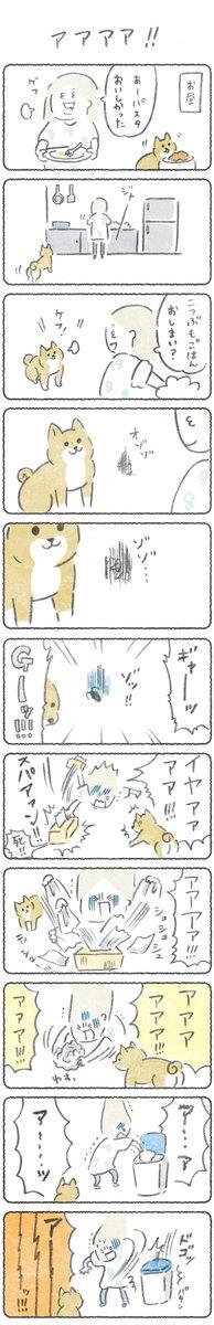 月曜はこつぶ新作の日😀(1週間無料で見れます)つづきはこちらからぜひ!→この後すぐコンバット買いに行った#漫画 #マンガ #エッセイ #柴犬
