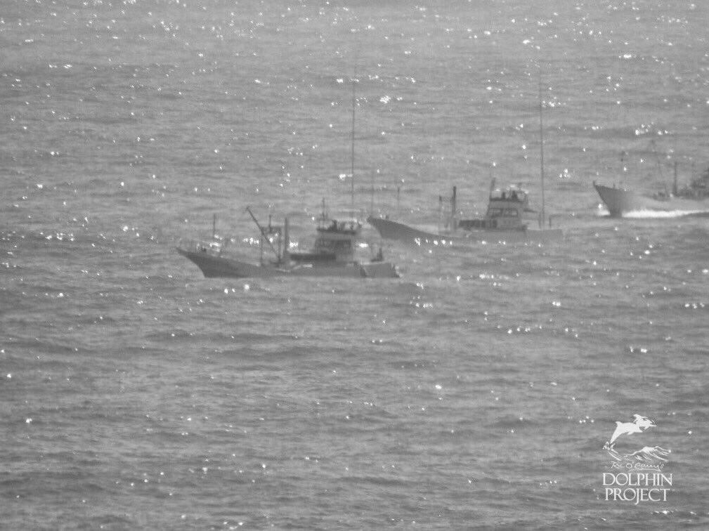 Taiji: Live on Instagram and Facebook @Dolphin_Project as a pod of dolphins is being driven into the cove. September 16, 2019 9:55 am #DolphinProject