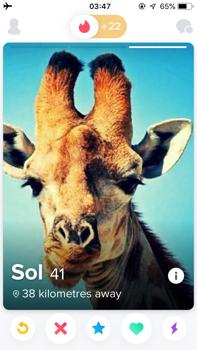 giraffe dating site