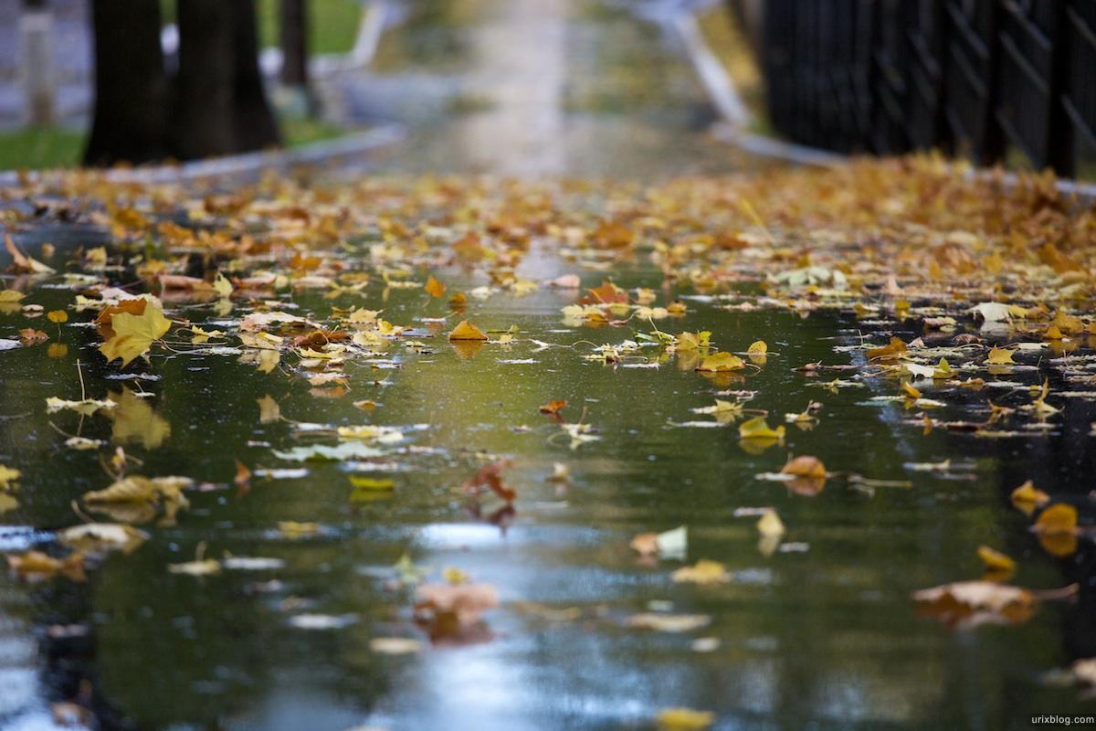 Осенние листья под дождем картинки