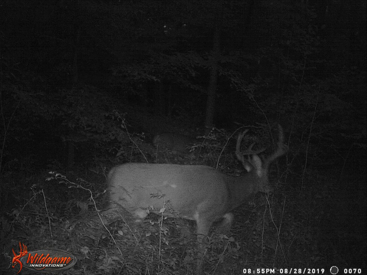 RT @SGOutdoors: Some other honorable mentions! #whitetail #deer #hunting #outdoors #hunt #hunter #fishing #nature #deerhunting #deer #photography #camping #dog #bowhunting #wildlife #guns #outdoor #rifle #huntinglife #huntingseason #archery #hiking #whit…
