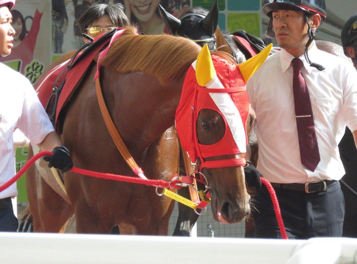 血統にトウカイテイオーの名前。 応援せずにはいられません✨ (📷2019.9.15) #ベストクィーン #幸英明 #ローズステークス #阪神競馬場