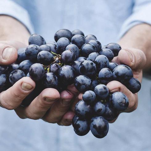 Festa dell'uva a Verla di Giovo dal 20 al 22 sette...