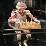 Image for the Tweet beginning: Body Worlds, la mostra dei