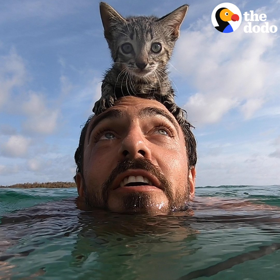 This kitten ran into the ocean to swim with her dad ❤️😻