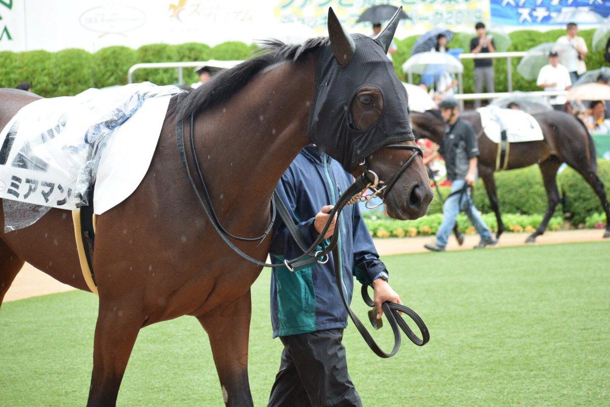2019.9.16 中山5R #ミアマンテ とっても可愛いお馬さんです😍💕 雨の中、頑張ってくれました😆✨ 素敵な写真が撮れて大満足です🤣ありがとうございました🙇♀️ 次走も楽しみにしています😆✨  #木村厩舎  #クリストフ・ルメール 騎手 #キングカメハメハ産駒