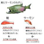 鮭とサーモンの違いがとても分かりやすい!こういうことだったのね!