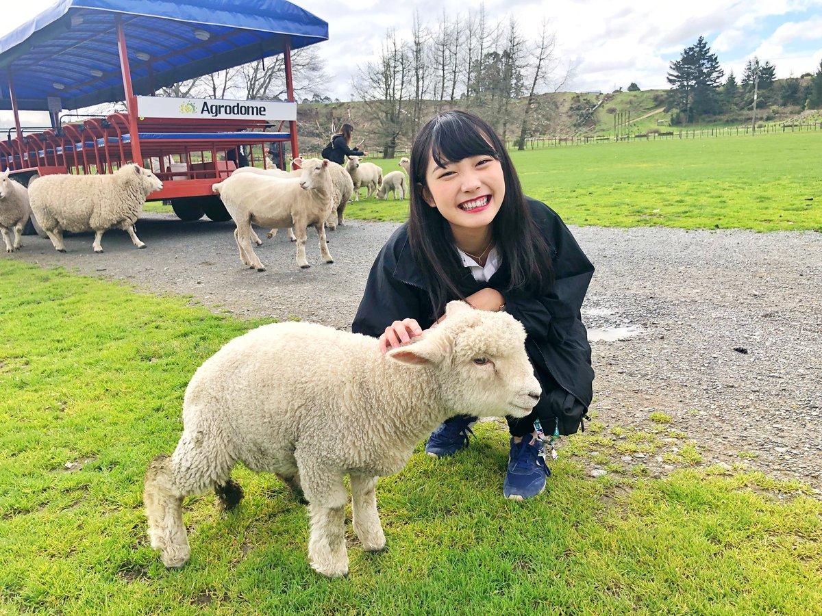 Twitter全然更新してなくてごめんなさい!私は今ニュージーランドにいます🇳🇿人口より羊の数の方が何倍も多いとか楽園じゃないですか…超癒されてる…🐏