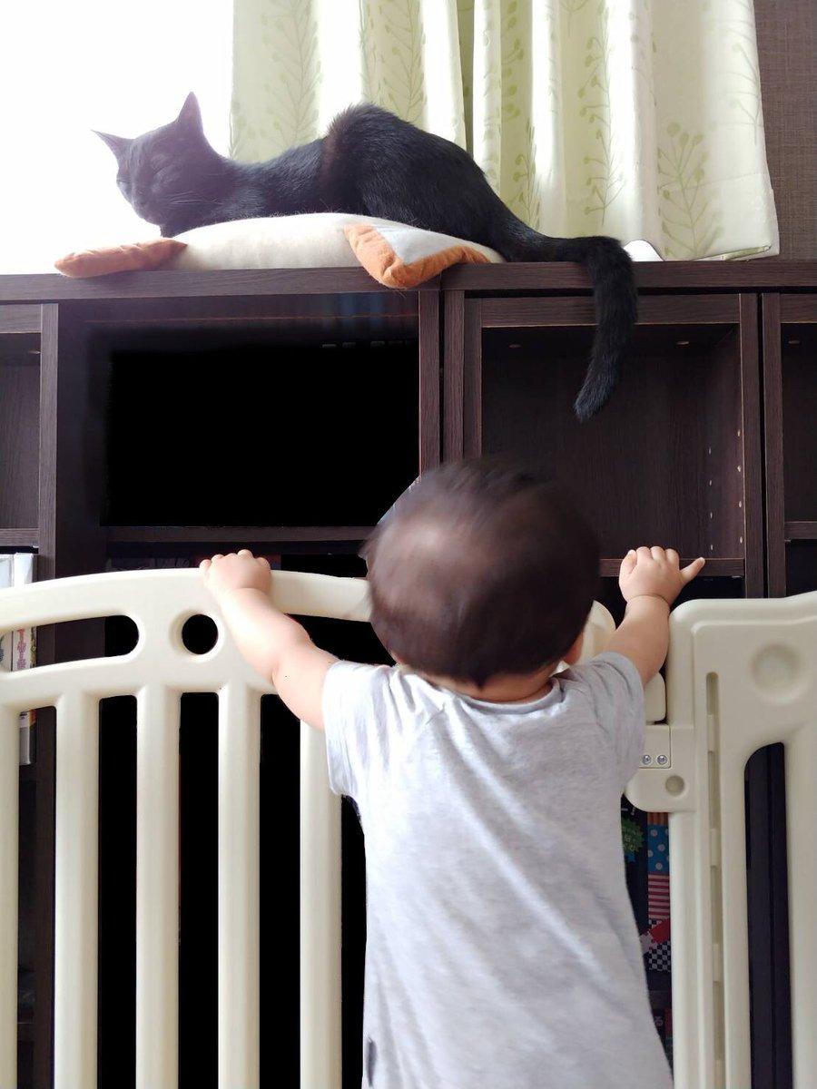 516日目。ふと見たら、垂れ下がる黒猫のしっぽに乳児が手を伸ばしていた。掴まれるぞ、と思ってやめさせようとしたら黒猫、乳児が触れそうで触れないあたりでしっぽをぶらんぶらん。結局、乳児は機嫌良く翻弄(?)され続け黒猫は余裕そうであった。遊んでいたのだろうか。