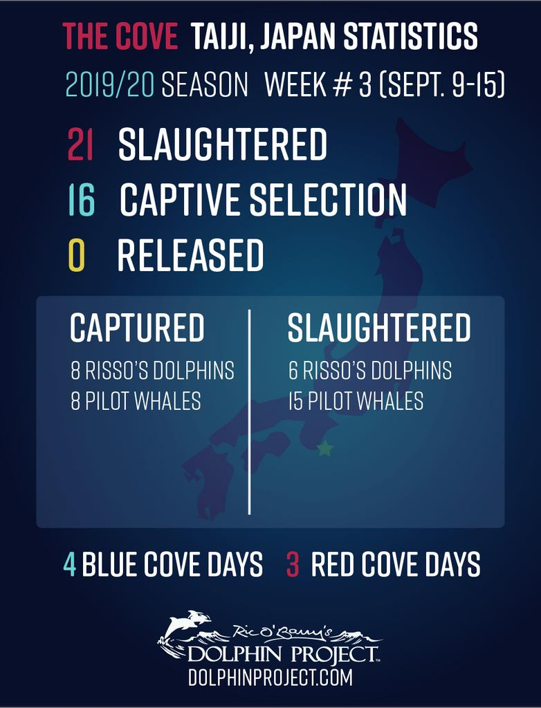 Risso's dolphin and pilot whale pods were decimated in week #3 of Taiji's hunts. TAKE ACTION: dolphin.fyi/HelpJapanDolph… #DolphinProject #TheCove #EmptyTheTanks