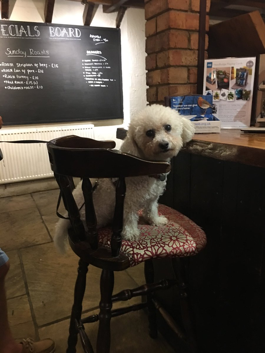 Stopped off for a delicious  dinner ⁦@FillyInnSetley⁩ Here I am placing my order at the bar! #NewForest #dogsontour #dogfriendly #greatpub Thank you for making us so welcome and the lovely grub <br>http://pic.twitter.com/XIZTTSvSG6