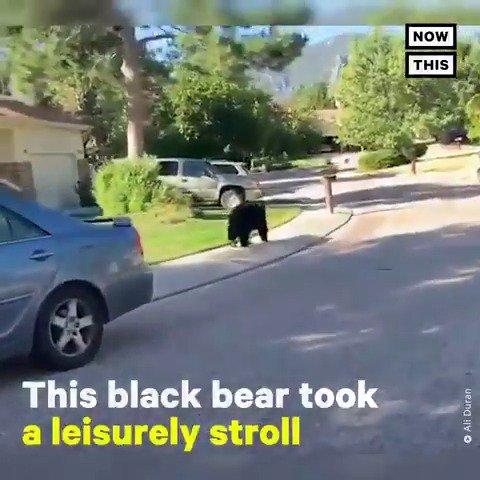 Lovely day for a stroll, eh, bear? 🐻