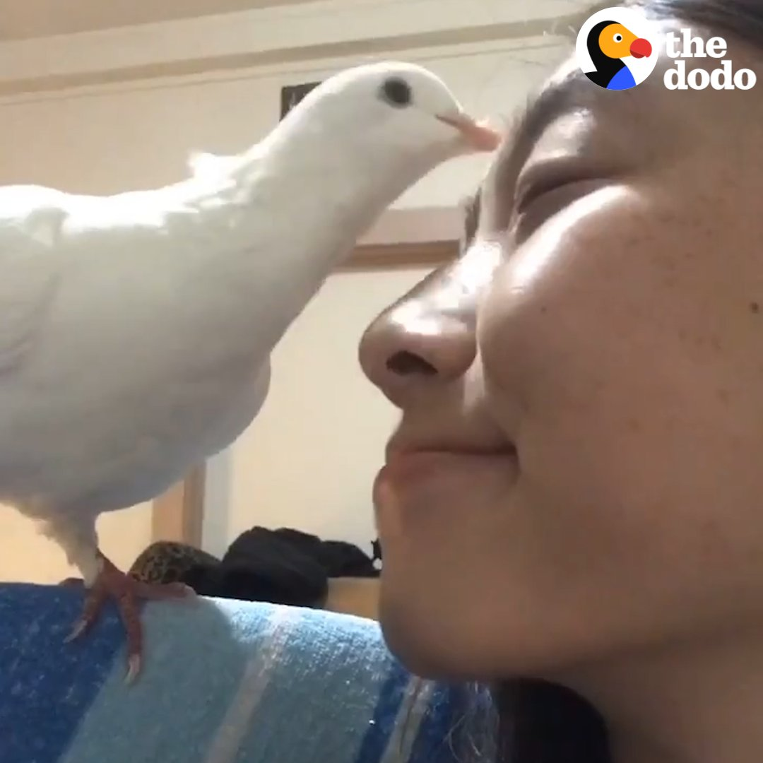 This pigeon gets so excited when her mom comes home from work 💕