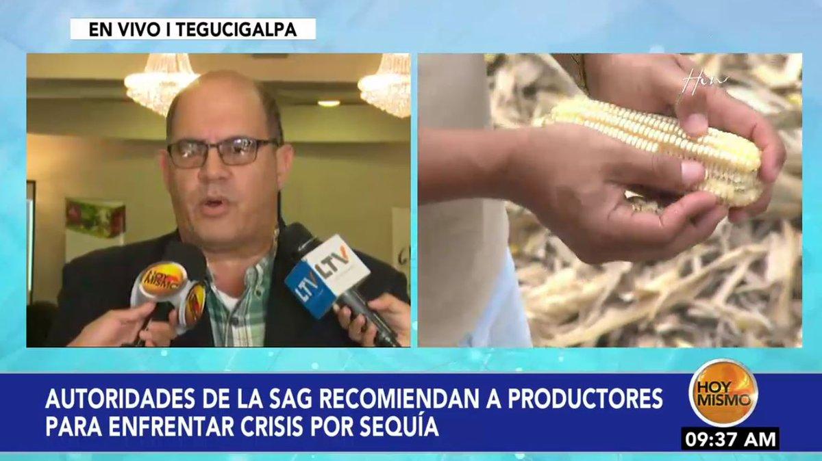 [EN VIVO] 🔴 |AHORA en #HoyMismo #PrimeraEdición, las pérdidas en cultivos por la sequía son irremediables, según autoridades de la SAG.
