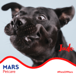 Image for the Tweet beginning: #PetsofMars: I'm Jude Alouicious Day.