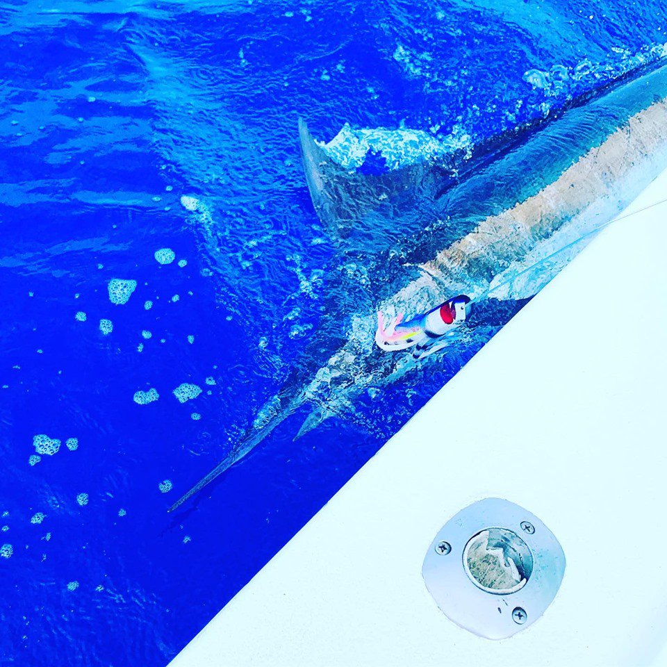 Kona, HI - High Noon went 1-1 on Blue Marlin.