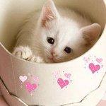 Image for the Tweet beginning: #whitecat #gatos #picoftheday #iphone8plus #cats