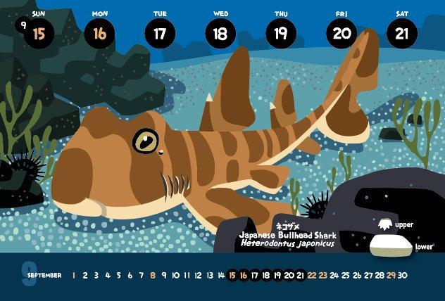 今週のカレンダー ネコザメ Heterodontus japonicus