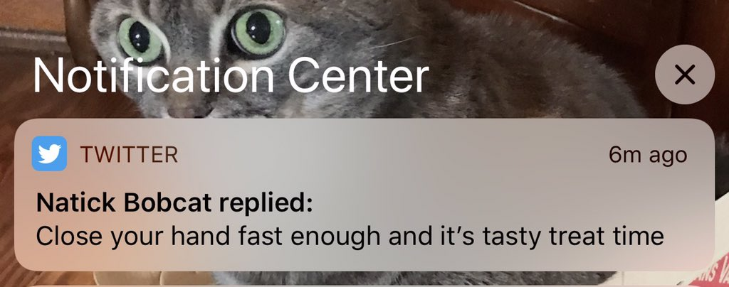 @NatickBobCat @otterX @facts_hedgehog Without the context this was a very unsettling notification