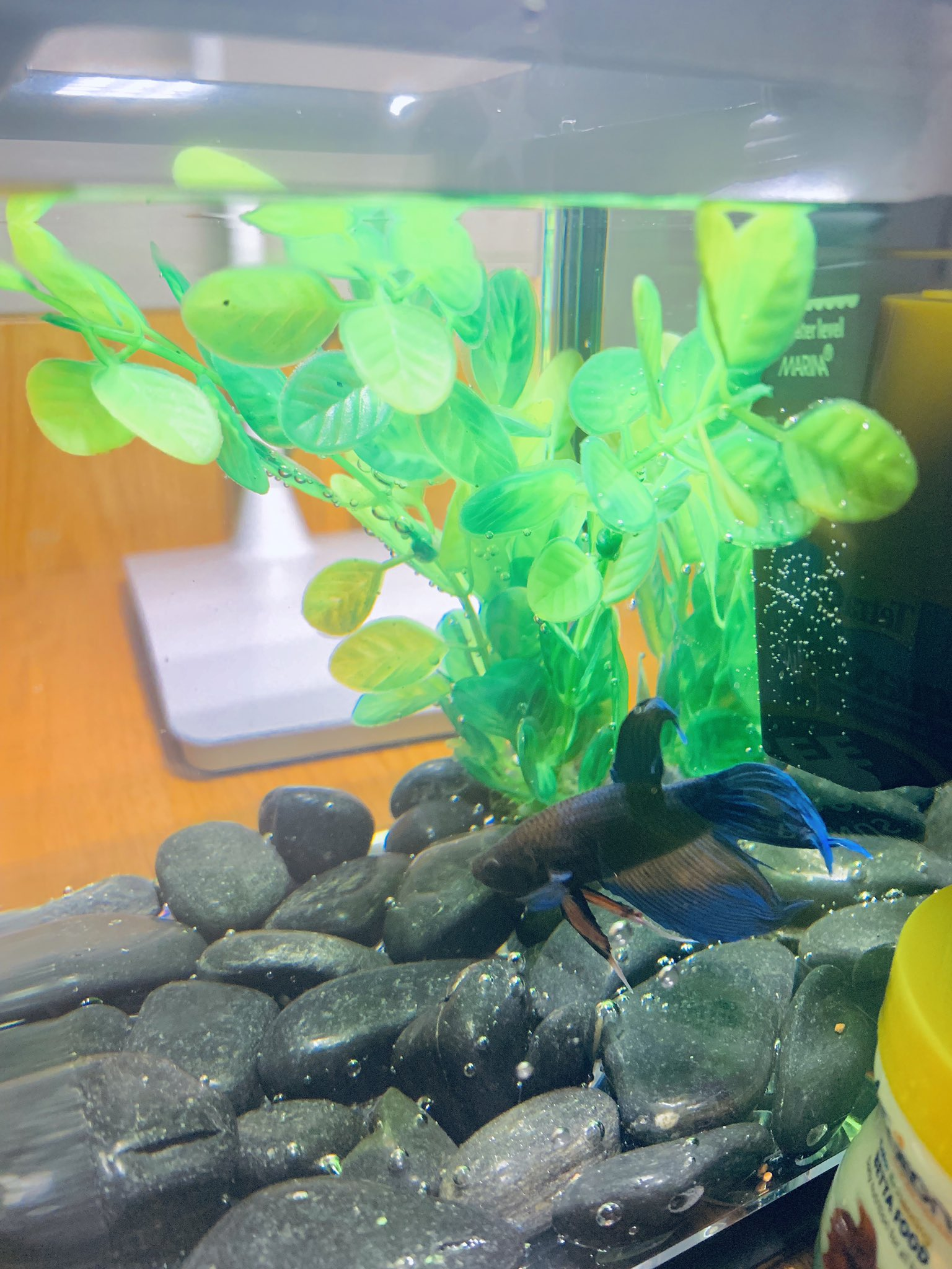I got a fish today and named it Leslie Knope. happy birthday Amy Poehler