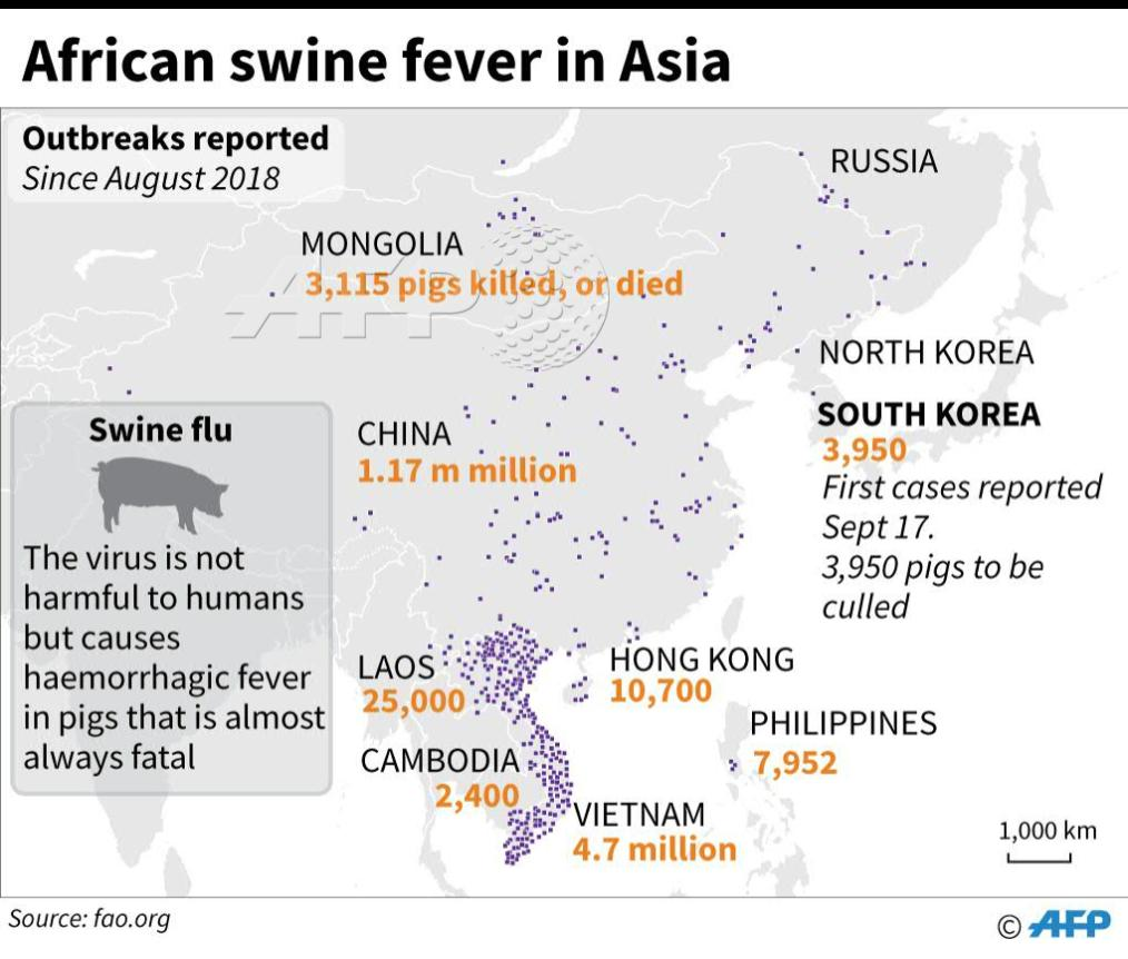 Image result for african swine fever outbreaks reported 2018 fao