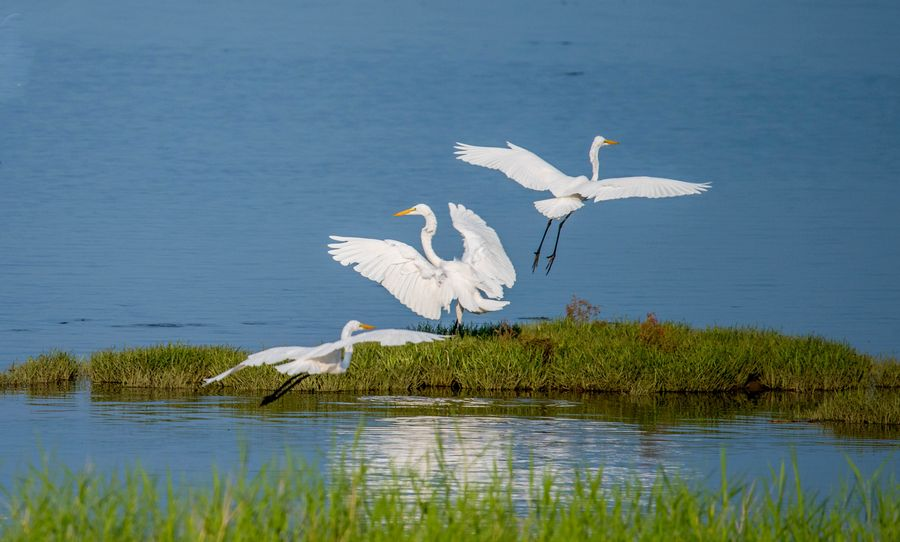 City of bird-watching welcomes flocks' frequent visits as years of environmental protection efforts pay off in north China's Beidaihe http://xhne.ws/QIXTS