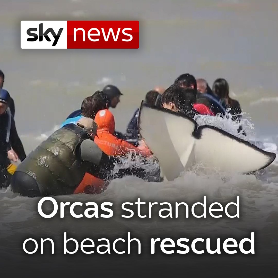 Rescue workers and volunteers have saved six of seven orcas that became stranded on an Argentine beach.  Watch more videos from Sky News here 👉