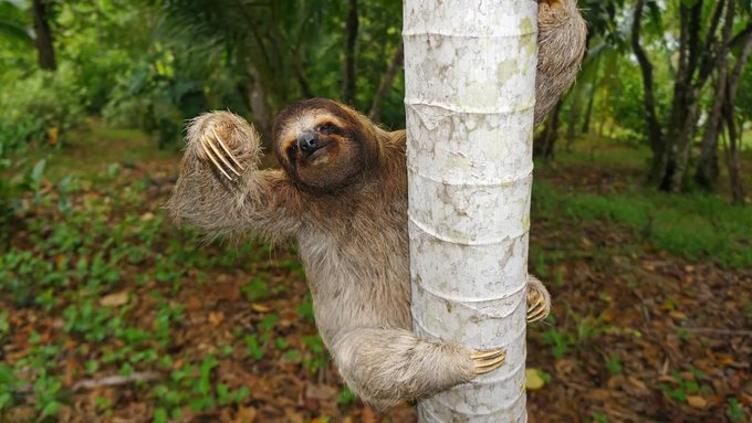 TODAY THU 09/17 HIGH 89 F  Enjoy the high season at low season prices now while supplies last. The Sid's await you. Come hang out with the #sloths in the tropical jungles. Amazing deals, rates as low as $59, Book now!!  #BienvenidaSwitchLite #MaçTekrarEdilmeliTFF #Ask_SUPERJUNIOR<br>http://pic.twitter.com/ZsQYKzHKuy