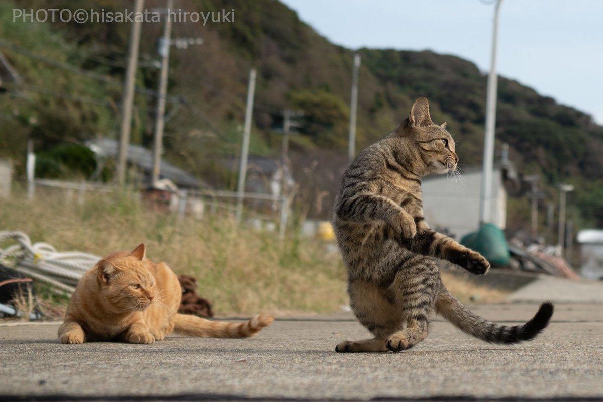 一匹だけ完全にのら猫拳に目覚めてる