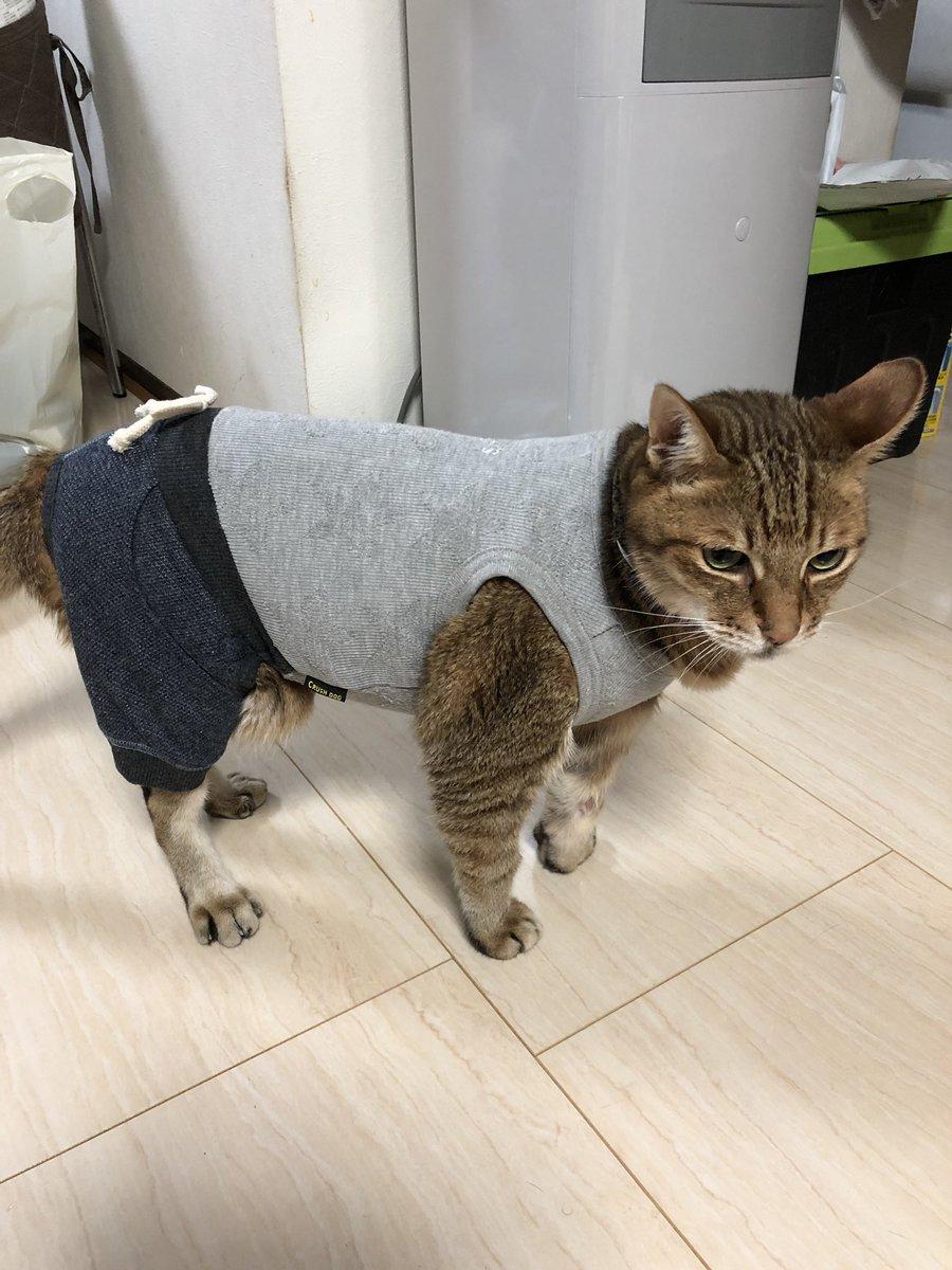 大吉、無事抜糸済んだのに、、、舐めまくり!でカサブタハゲたりしたから強制的に服着せました!犬用Lサイズがパツパツ( ̄▽ ̄)