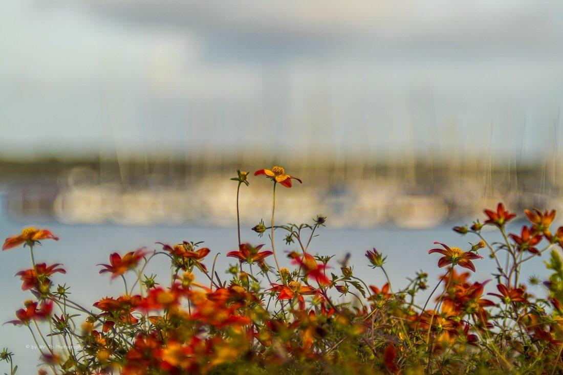 Wundervoller Blick. 🥰 Die Segelmasten an der Kieler Förde  verschmelzen im Himmel.   #kiellinie #kiel #kielerförde #schleswigholstein #germany  #50mm #outdoor #minolta #vintagelens #photograghy #photooftheday #picoftheday #norden #bokeh #bokehlicious #september