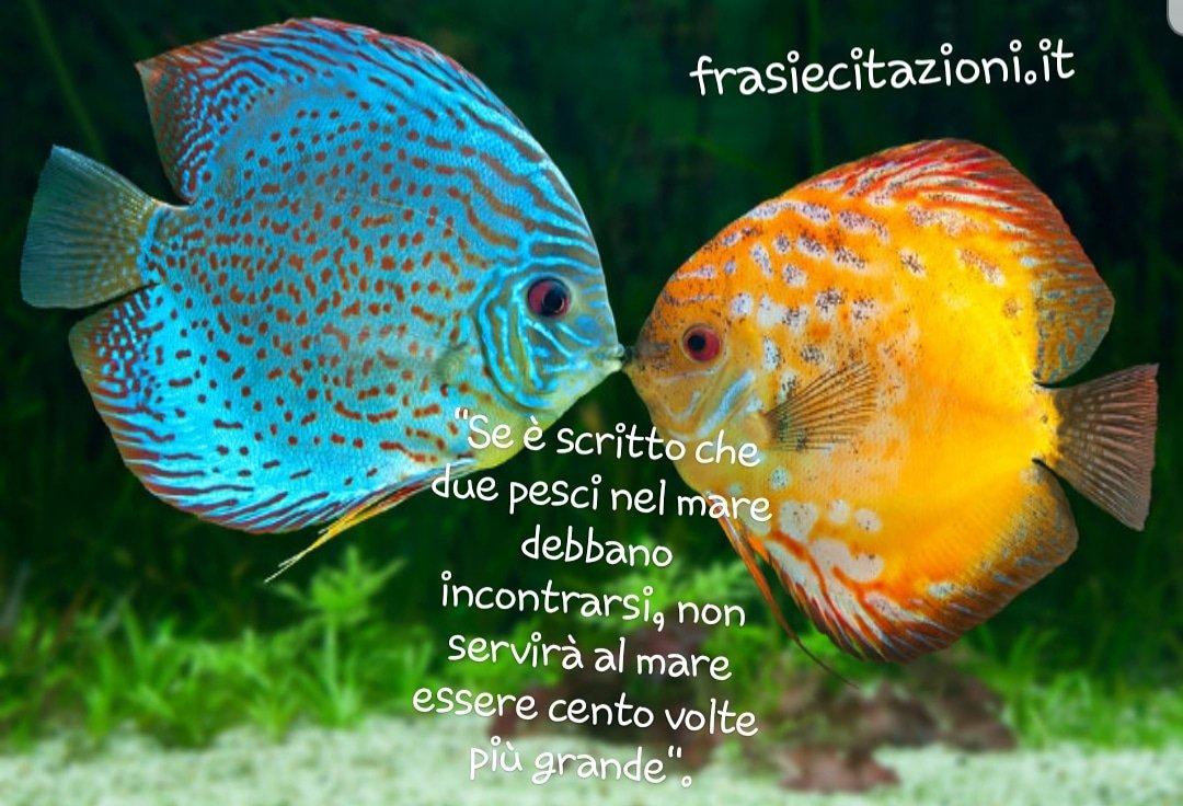 Frasiecitazioni On Twitter Se è Scritto Che Due Pesci Nel