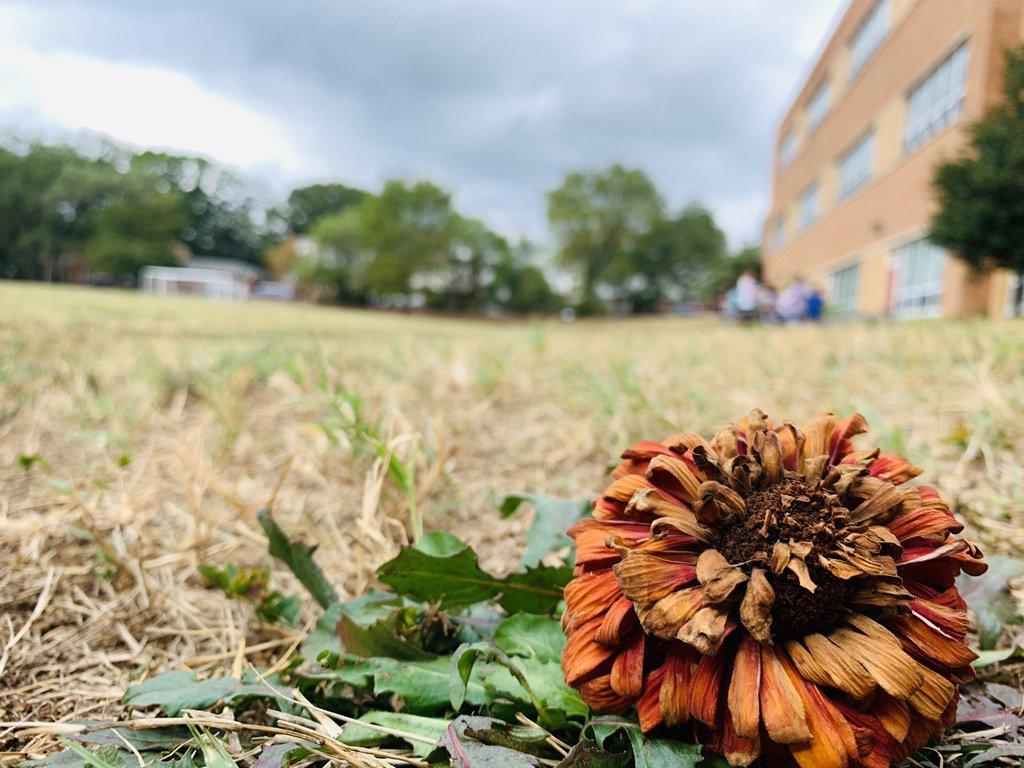 Nature photography 4th grade <a target='_blank' href='http://twitter.com/HFBAllStars'>@HFBAllStars</a> <a target='_blank' href='http://search.twitter.com/search?q=APSisAwesome'><a target='_blank' href='https://twitter.com/hashtag/APSisAwesome?src=hash'>#APSisAwesome</a></a> <a target='_blank' href='http://twitter.com/APSArts'>@APSArts</a> <a target='_blank' href='http://twitter.com/hfbPTA'>@hfbPTA</a> <a target='_blank' href='https://t.co/7vvFVp8Vox'>https://t.co/7vvFVp8Vox</a>