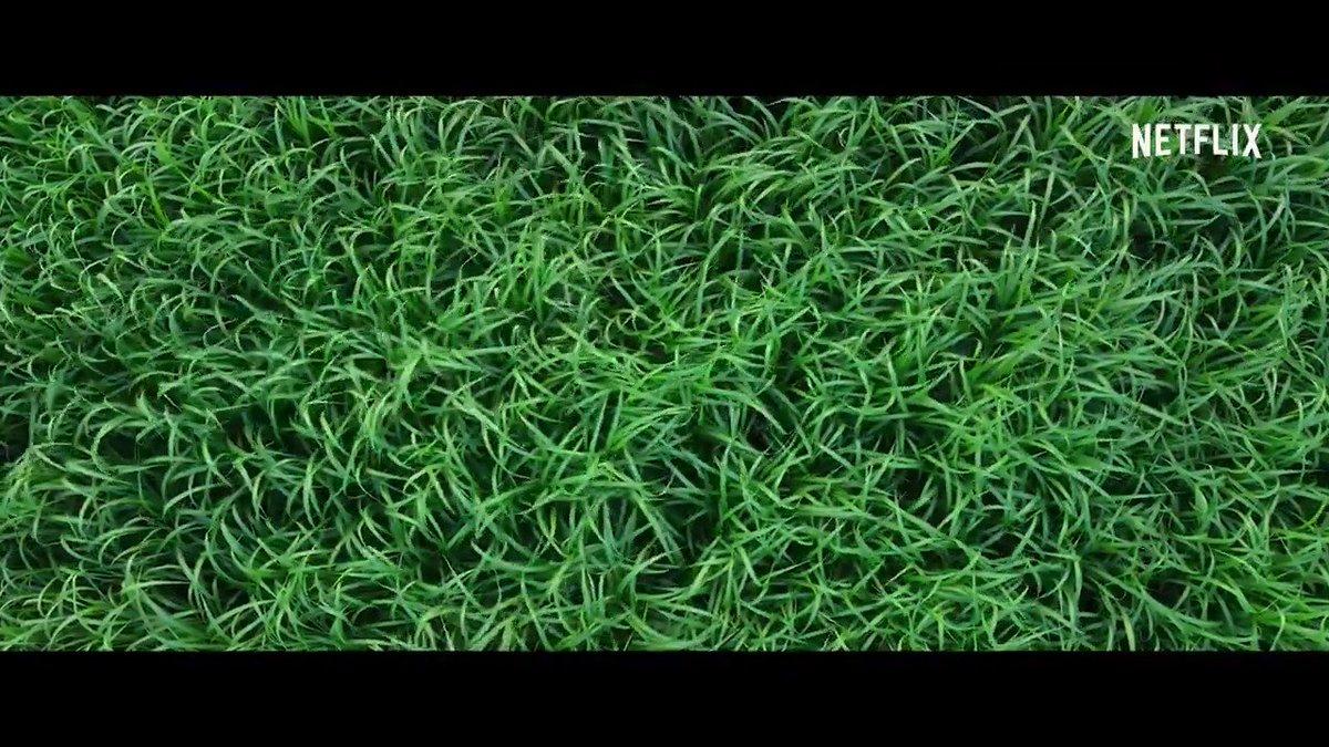 RT @WatchmenID: In The Tall Grass Film terbaru dari adaptasi novel Stephen King  RUMPUT DOANG BISA JADI SEREM :(((  https://t.co/ke14kFFfG4