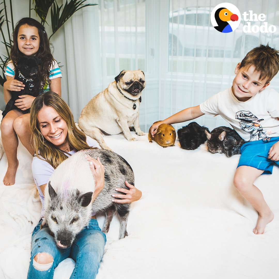 Meet the family with 15 pets, one crazy schedule and the most perfect life ❤️❤️