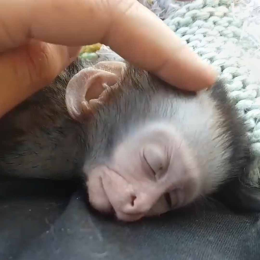This couple spends 20 hours a day rescuing monkeys🐒❤️