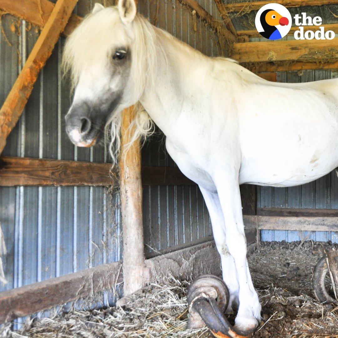 Watch this pony who's spent 10 years alone finally get his life back 🐴❤️
