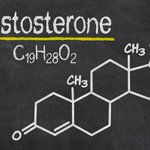 Image for the Tweet beginning: What does testosterone really do?