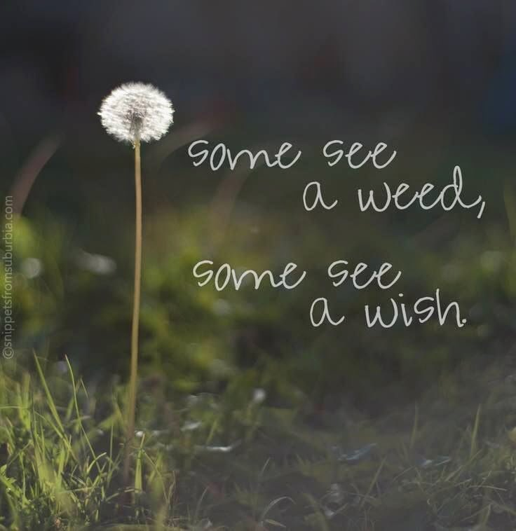 Our perspective has a huge impact on how we see things. So many times we look for the negative instead of seeing the positive. Will you see a weed or a wish? #EduGladiators #LeadLAP #leadlap #satchat #edchat #txeduchat #HackLearning #tlap<br>http://pic.twitter.com/gU9L0ZPMcc