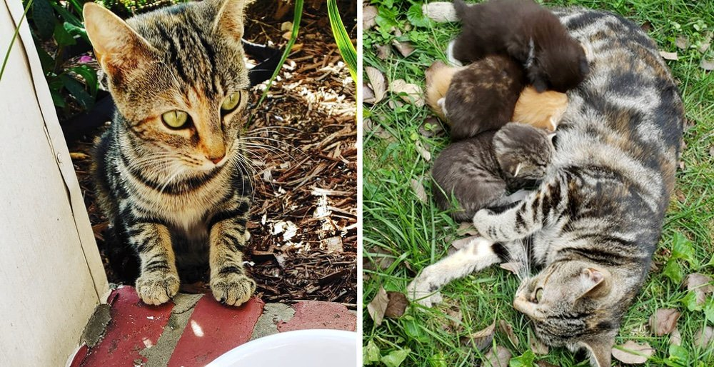 Stray cat came back to the person who helped her, and took her to see her kittens. See full story and updates: lovemeow.com/stray-cat-kitt…