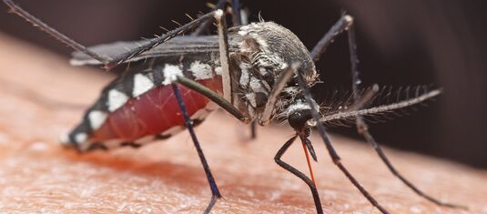 Close-up image of mosquito