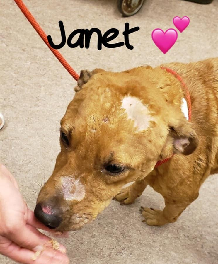⚠️🆘 CRITICALLY ❌URGENT 🆘⚠️ Janet is slated for euth on 9/19 because she has severe allergic hives of an unknown origin🙄 The Shelter has decided that the best thing to do for this sweet puppy is to kill her.🤬 #PLEDGE #RESCUE #RT 🚫💉 dogadoptions.franklincountyohio.gov/rescue-dogs/do… … Columbus, OH
