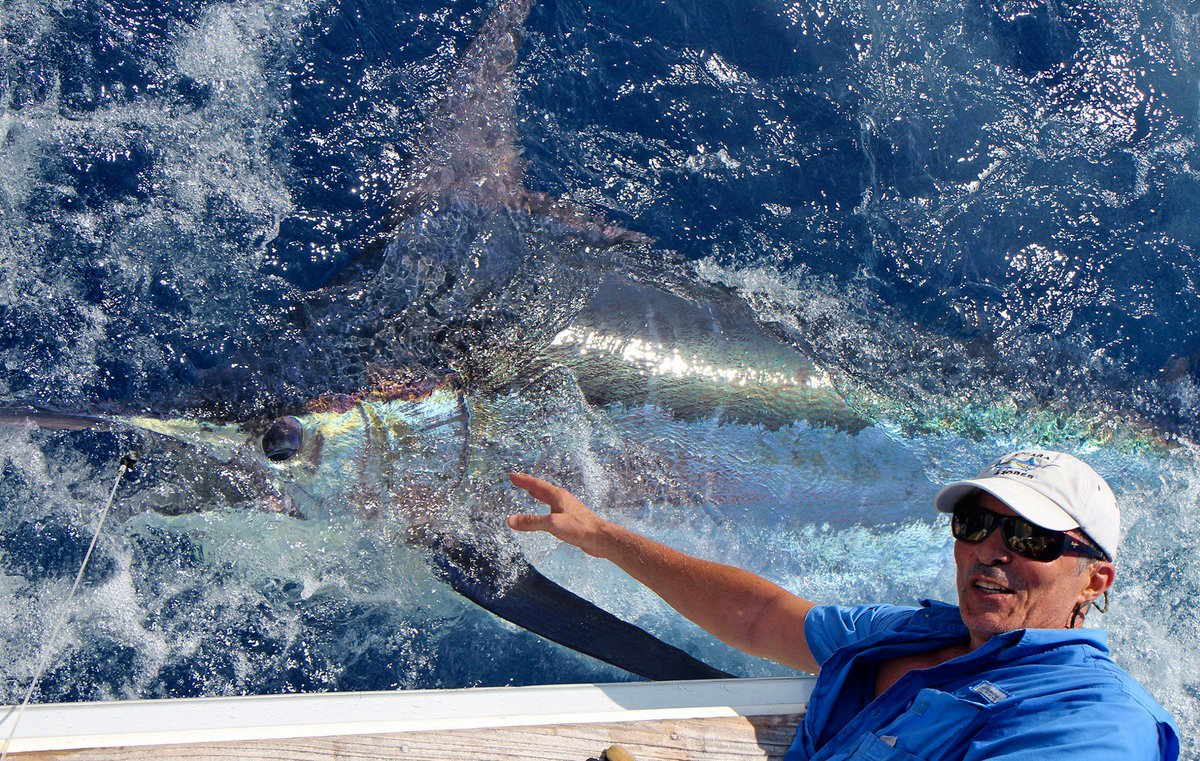 Azores - Brasilia went 2-3 on Blue Marlin (750).