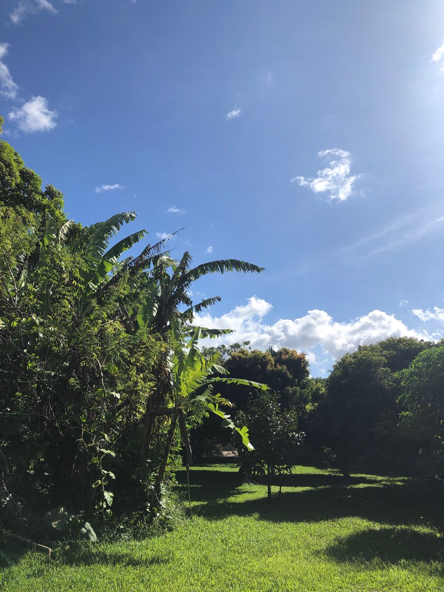 test Twitter Media - Beautiful warm day in Haiku. #cmweather #Maui https://t.co/mArWFWe3yJ